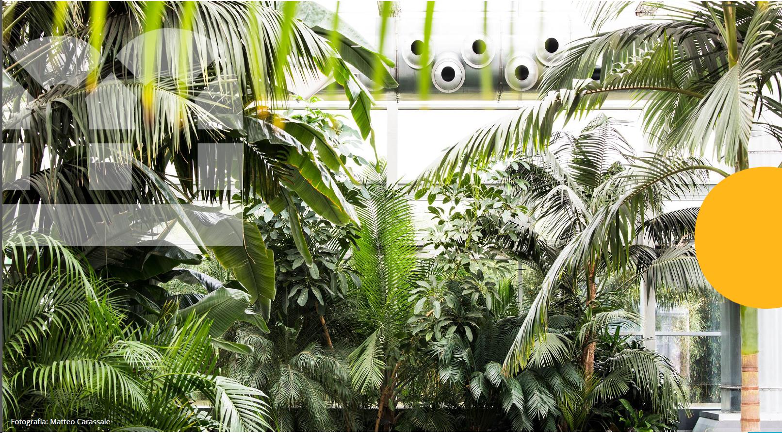 Read more about the article Study Tour «Fotovoltaico, architettura e paesaggio nella Fondazione Radicepura»